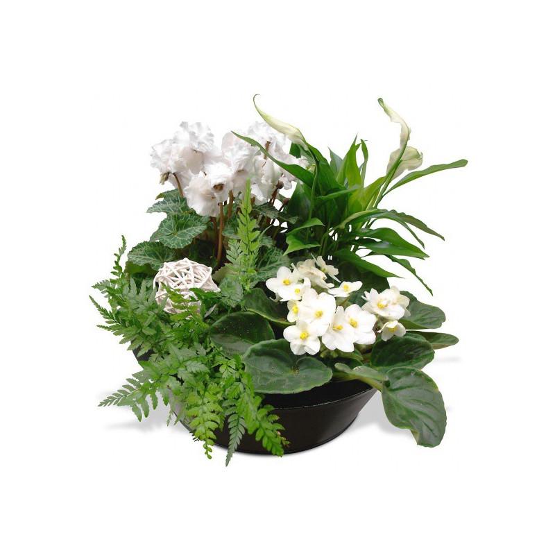 FLOWERS COMPOSITION JARDIN ZEN