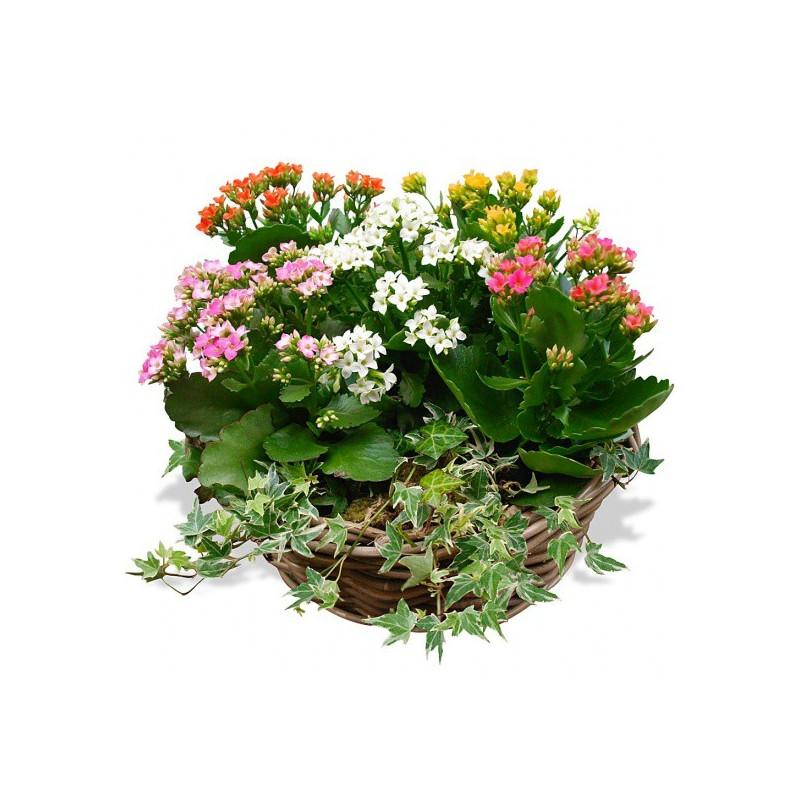 FLOWERS COMPOSITION KALANCHOÉ