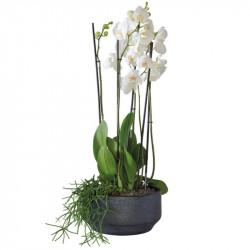 WHITE ORCHIDS COMPOSITION
