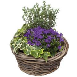 PLANT CUTTINGS - AVEC VOUS
