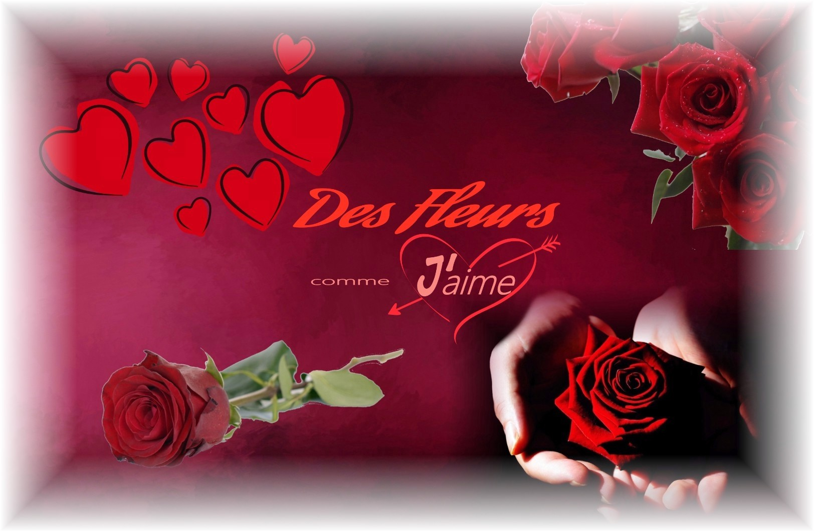 ROSE ROUGE - FLEURS SAINT VALENTIN - ROSES SAINT VALENTIN