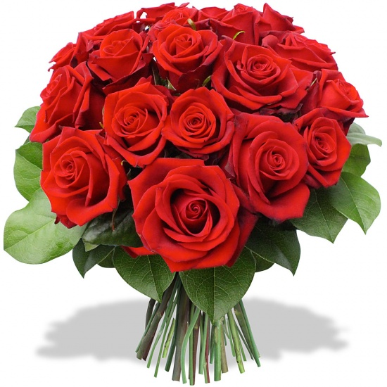 RED ROSES.  Paris, red roses Marseille, red roses Lyon, red roses Toulouse, red roses Nice, red roses Nantes, red roses Montpellier, red roses Strasbourg, red roses Bordeaux, red roses Lille, red roses Rennes, red roses Reims, red roses Le Havre, red roses Saint-Étienne, red roses Toulon, red roses Grenoble, red roses Dijon, red roses Angers, red roses Nîmes, red roses Villeurbanne, red roses Le Mans, red roses Aix-en-Provence, red roses Clermont-Ferrand, red roses Brest, red roses Tours, red roses Limoges, red roses Amiens, red roses Annecy, red roses Perpignan, red roses Boulogne-Billancourt, red roses Metz, red roses Besançon, red roses Orléans, red roses Saint-Denis, red roses Argenteuil, red roses Mulhouse, red roses Rouen, red roses Montreuil, red roses Caen, red roses Nancy, red roses Tourcoing, red roses Roubaix, red roses Nanterre, red roses Vitry-sur-Seine, red roses Avignon, red roses Créteil, red roses Dunkerque, red roses Poitiers, red roses Asnières-sur-Seine, red roses Versailles, red roses Colombes, red roses Saint-Pierre, red roses Aubervilliers, red roses Aulnay-sous-Bois, red roses Courbevoie, red roses Fort-de-France, red roses Cherbourg-en-Cotentin17, red roses Rueil-Malmaison, red roses Pau, red roses Champigny-sur-Marne, red roses Le Tampon, red roses Béziers, red roses Calais, red roses La Rochelle, red roses Saint-Maur-des-Fossés, red roses Antibes, red roses Cannes, red roses Colmar, red roses Mérignac, red roses Saint-Nazaire, red roses Drancy, red roses Issy-les-Moulineaux, red roses Noisy-le-Grand, red roses Bourges, red roses La Seyne-sur-Mer, red roses Levallois-Perret, red roses Quimper, red roses Cergy, red roses Valence, red roses Vénissieux, red roses Villeneuve-d'Ascq, red roses Antony, red roses Pessac, red roses Troyes, red roses Neuilly-sur-Seine, red roses Clichy, red roses Montauban, red roses Chambéry, red roses Ivry-sur-Seine, red roses Niort, red roses Lorient, red roses Sarcelles, red roses Villejuif, red roses Hyères, red roses Saint-Quentin, red roses Les Abymes, red roses Le Blanc-Mesnil, red roses Pantin, red roses Maisons-Alfort, red roses Beauvais, red roses Évry, red roses Épinay-sur-Seine, red roses Chelles, red roses Cholet, red roses Meaux, red roses Fontenay-sous-Bois, red roses La Roche-sur-Yon, red roses Saint-Louis, red roses Narbonne, red roses Bondy, red roses Vannes, red roses Fréjus, red roses Arles, red roses Clamart, red roses Sartrouville, red roses Bobigny, red roses Grasse, red roses Sevran, red roses Corbeil-Essonnes, red roses Laval, red roses Belfort, red roses Albi, red roses Vincennes, red roses Évreux, red roses Martigues, red roses Cagnes-sur-Mer, red roses Bayonne, red roses Montrouge, red roses Suresnes, red roses Saint-Ouen, red roses Massy, red roses Charleville-Mézières, red roses Brive-la-Gaillarde, red roses Vaulx-en-Velin, red roses Carcassonne, red roses Saint-Herblain, red roses Saint-Malo, red roses Blois, red roses Aubagne, red roses Chalon-sur-Saône, red roses Meudon, red roses Châlons-en-Champagne, red roses Puteaux, red roses Saint-Brieuc, red roses Saint-Priest, red roses Salon-de-Provence, red roses Mantes-la-Jolie, red roses Rosny-sous-Bois, red roses Gennevilliers, red roses Livry-Gargan, red roses Alfortville, red roses Bastia, red roses Valenciennes, red roses Choisy-le-Roi, red roses Châteauroux, red roses Sète, red roses Saint-Laurent-du-Maroni, red roses Noisy-le-Sec, red roses Istres, red roses Garges-lès-Gonesse, red roses Boulogne-sur-Mer, red roses Caluire-et-Cuire, red roses Talence, red roses Angoulême, red roses La Courneuve, red roses Le Cannet, red roses Castres, red roses Wattrelos, red roses Bourg-en-Bresse, red roses Gap, red roses Arras, red roses Bron, red roses Thionville, red roses Tarbes, red roses Draguignan, red roses Compiègne, red roses Douai, red roses Saint-Germain-en-Laye, red roses Melun, red roses Rezé, red roses Gagny, red roses Stains, red roses Alès, red roses Bagneux, red roses Marcq-en-Barœul, red roses Chartres, red roses Colomiers, red roses Anglet, red roses Saint-Martin-d'Hères, red roses Montélimar, red roses Pontault-Combault, red roses Joué-lès-Tours, red roses Châtillon, red roses Poissy, red roses Montluçon, red roses Villefranche-sur-Saône, red roses Villepinte, red roses Savigny-sur-Orge, red roses Bagnolet, red roses Sainte-Geneviève-des-Bois, red roses Échirolles, red roses La Ciotat, red roses Creil, red roses Annemasse, red roses Saint-Martin, red roses Conflans-Sainte-Honorine, red roses Thonon-les-Bains, red roses Saint-Chamond, red roses Roanne, red roses Neuilly-sur-Marne, red roses Auxerre, red roses Tremblay-en-France, red roses Saint-Raphaël, red roses Franconville, red roses Haguenau, red roses Nevers, red roses Vitrolles, red roses Agen, red roses Le Perreux-sur-Marne, red roses Marignane, red roses Saint-Leu, red roses Romans-sur-Isère, red roses Six-Fours-les-Plages, red roses Châtenay-Malabry, red roses Mâcon, red roses Montigny-le-Bretonneux, red roses Palaiseau, red roses Cambrai, red roses Sainte-Marie, red roses Meyzieu, red roses Athis-Mons, red roses Villeneuve-Saint-Georges, red roses Matoury, red roses Trappes, red roses Les Mureaux, red roses Houilles, red roses Épinal, red roses Plaisir, red roses Châtellerault, red roses Schiltigheim, red roses Villenave-d'Ornon, red roses Nogent-sur-Marne, red roses Liévin, red roses Baie-Mahault, red roses Chatou, red roses Goussainville, red roses Dreux, red roses Viry-Châtillon, red roses L'Haÿ-les-Roses, red roses Vigneux-sur-Seine, red roses Charenton-le-Pont, red roses Mont-de-Marsan, red roses Saint-Médard-en-Jalles, red roses Lens, red roses Rillieux-la-Pape, red roses Savigny-le-Temple, red roses Maubeuge, red roses Clichy-sous-Bois
